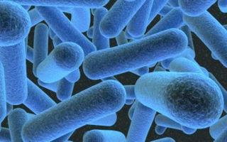 Как можно заразиться сифилисом