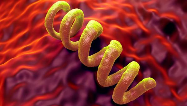 Бактерия сифилиса